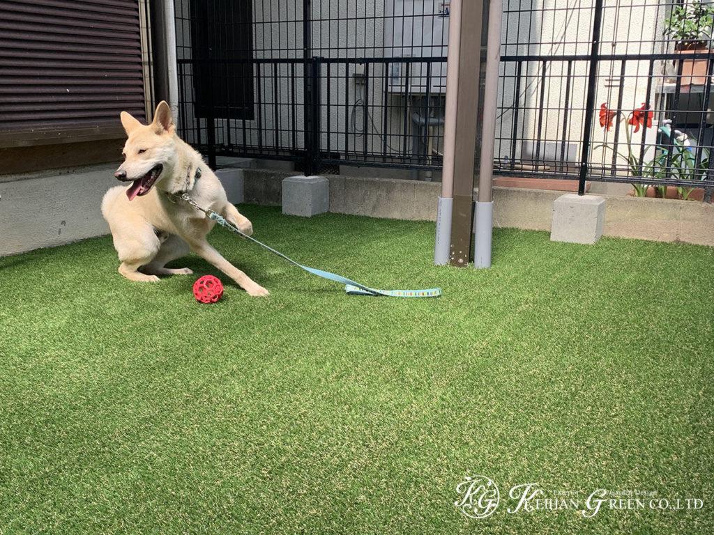 ワンちゃんが快適に過ごせるお庭へリフォーム 大津市