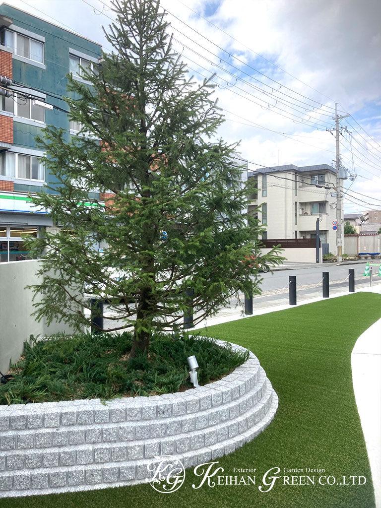 大きなモミノキがシンボルツリー クリニックのエントランス 京都市